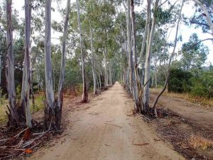 stay at seymour motel and explore country victoria on your bike